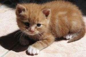 Ричард, Фауст или Васька: как назвать котёнка-мальчика?