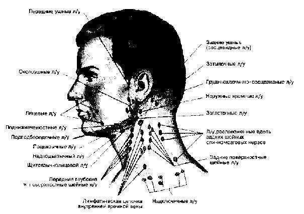 Воспаление Лимфоузлов На Шее И Околоушные