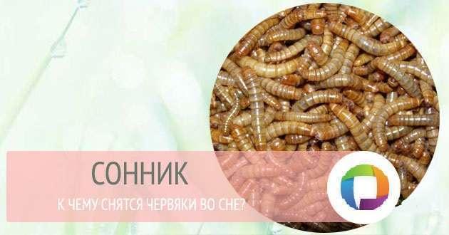 ебут к чему снятся червяки в своем теле дает везде