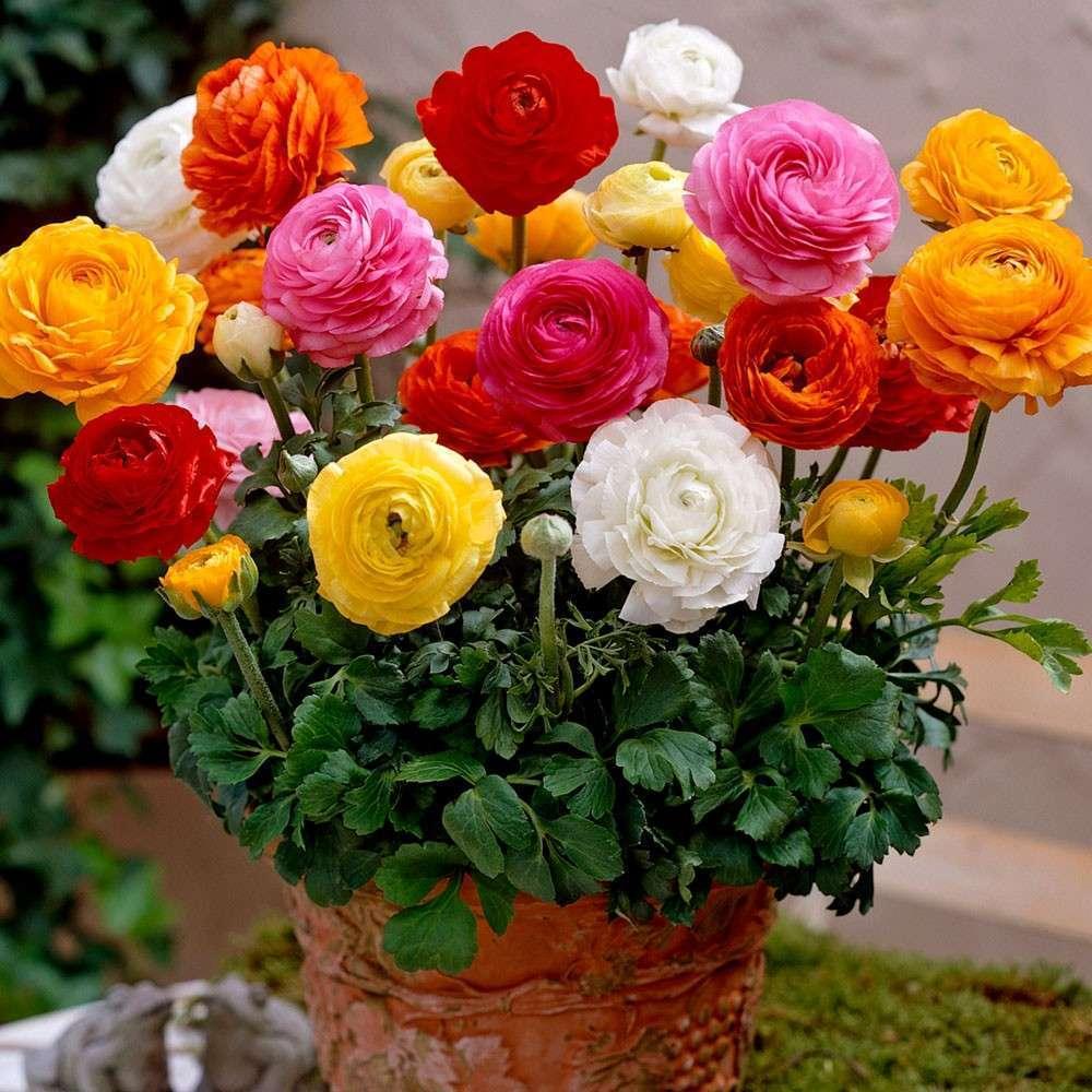 приятно лютики цветочки фото аэропорту вам