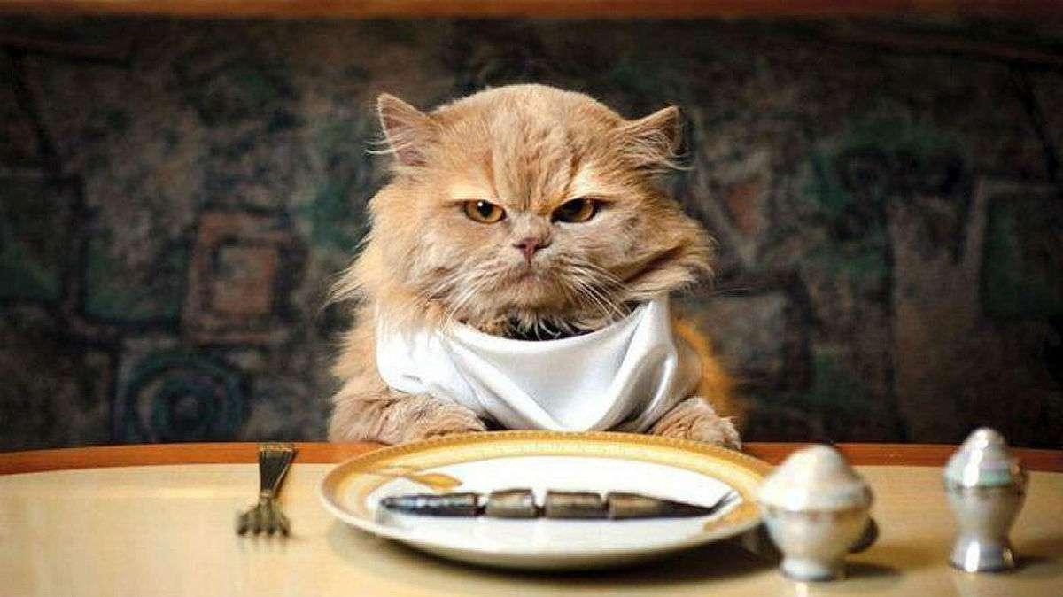 Животными, прикольные картинки ем