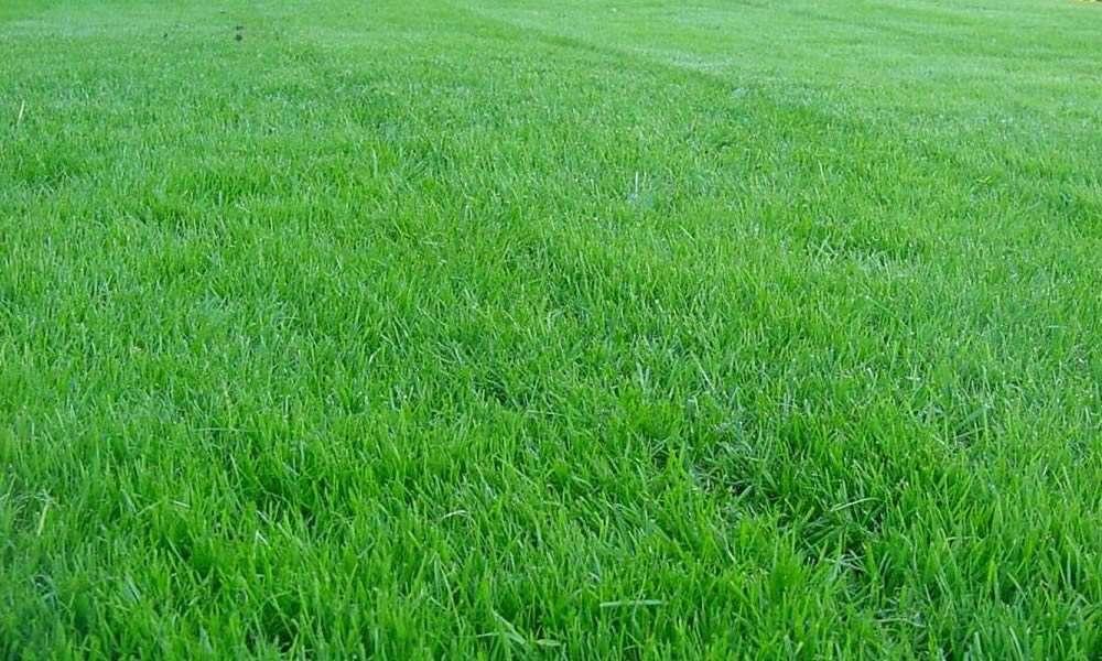 Появление газонной травы: каковы сроки и от чего они зависят?