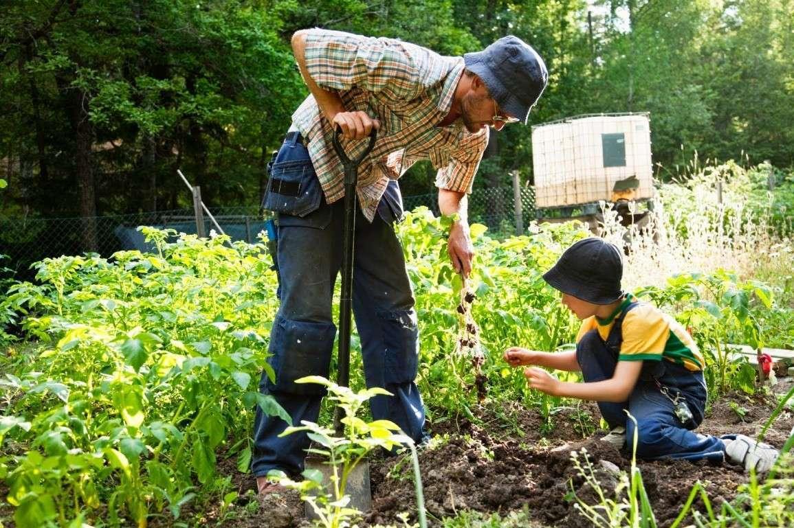 Приколы просто, картинки о работе в огороде