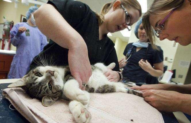 физкультурно-оздоровительных комплексов как усыпляют кошек в ветклиниках ночью