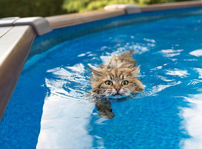коты плавают в бассейне