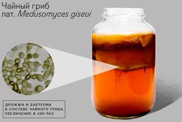 как нужно ухаживать за чайным грибом