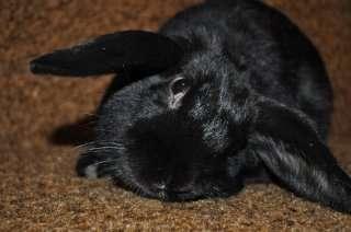 инсульт у кроликов симптомы