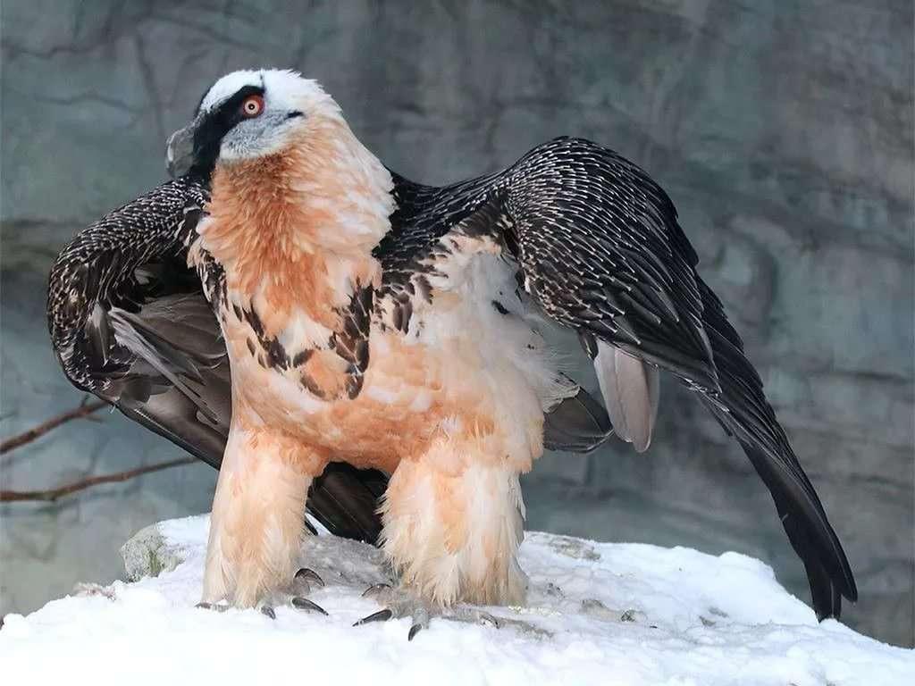 птицы и животный мир европы фото также провинции коньяк