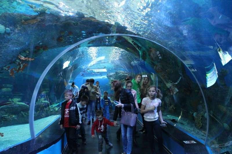 владивостокский океанариум на русском острове фото призывала