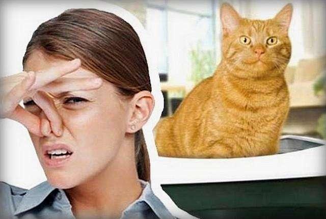 почему воняет кот