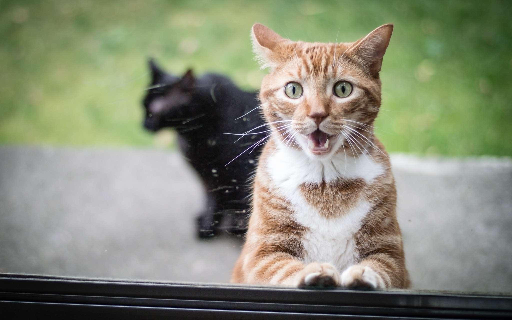 Почему воняет котом в доме?