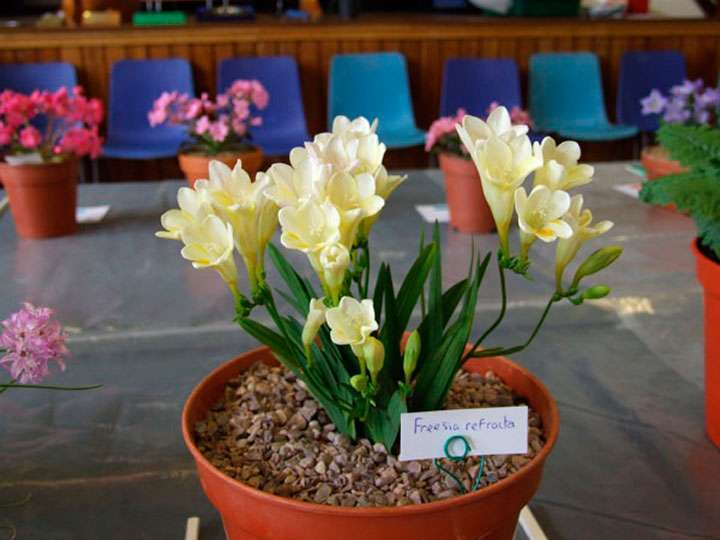 Уход за цветком в домашних условиях