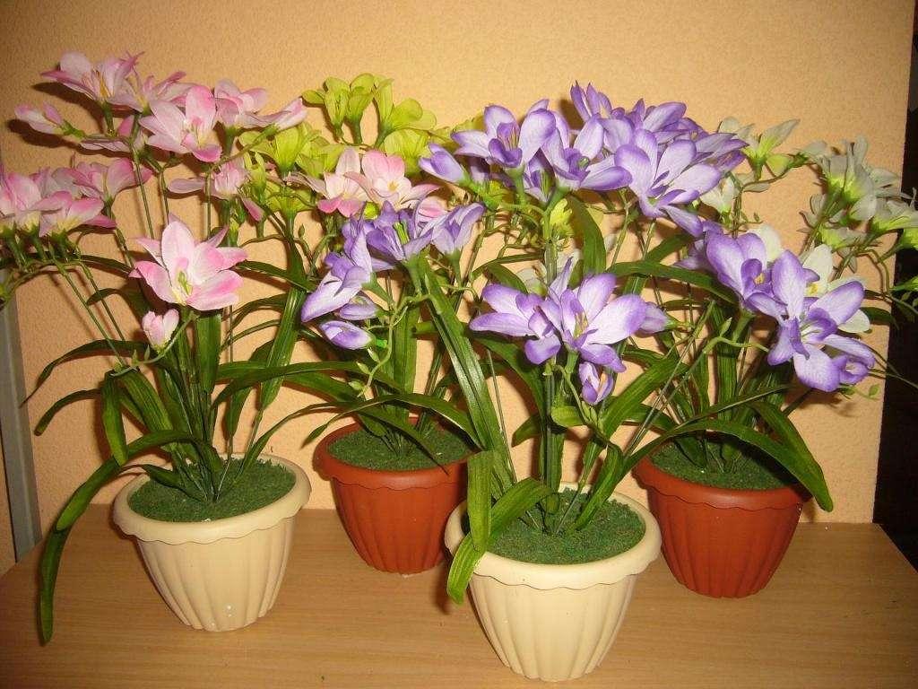Выращивание фрезии в домашних условиях с фото