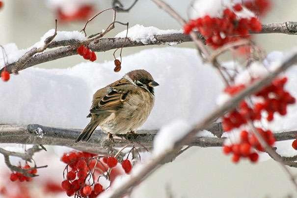 Чем питаться зимой