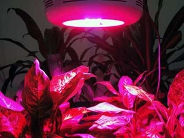 Светодиодное освещение цветов своими руками