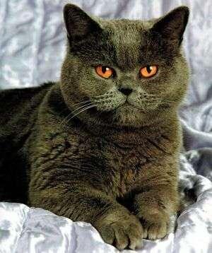 Портретная фотография кошки