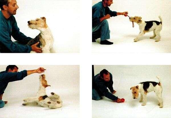 фотография собаки с ассистентом