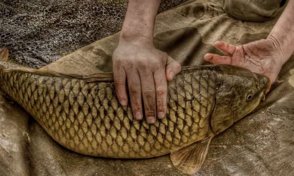 Верно подобрав прикормку, вы сможете поймать самую крупную рыбу в водоеме