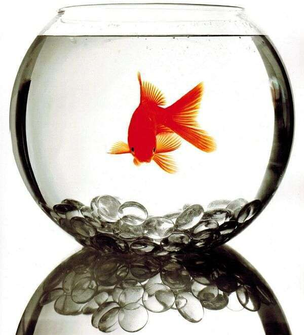 фотография рыбы