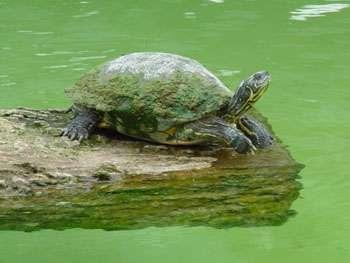 Как ухаживать за черепахой в домашних условиях — комфорт и уют