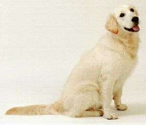 Портретная фотография собаки
