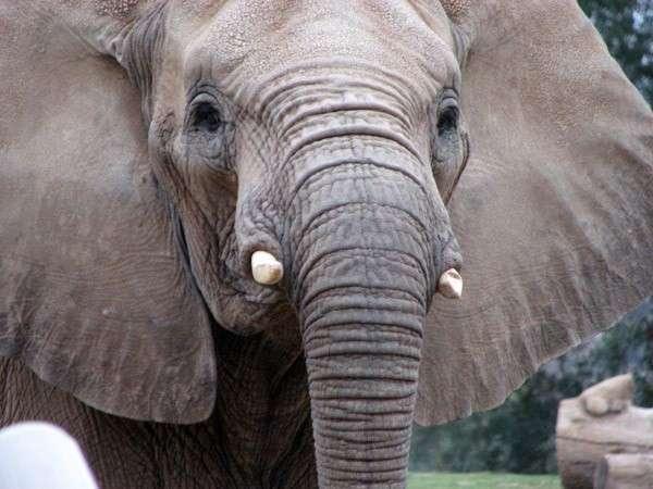 9. Слоны