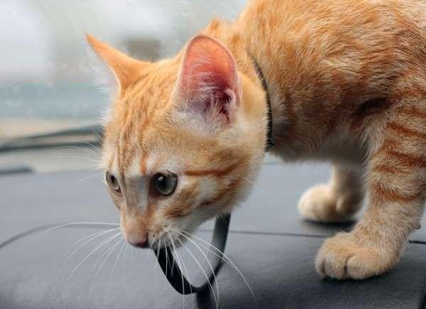 Проще всего перевезти кота в личном автомобиле