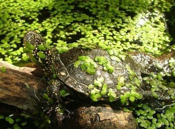 Фото пруд черепахи тортиллы