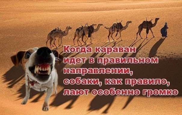 http://www.rutvet.ru/sites/default/files/photos/de420573ff6d9088ba6c6b8c95c292ac.jpg