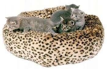 А если много кошек, сшейте им большую подушку! Фото с сайта http://mybritishcat.ru/