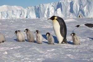 Южное сияние, пингвины, подлёдные реки и другие достопримечательности Антарктиды