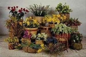 Комнатные растения: правила размещения