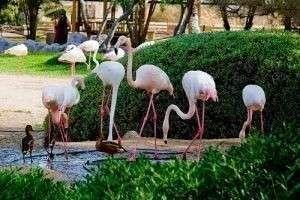 Национальный парк Аль-Арин (Бахрейн)