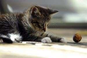 Как определить возраст котёнка: по зубам, размерам и глазам