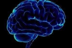 10 фактов о мозге