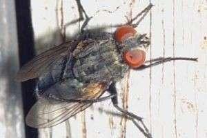 Как избавиться от мух?