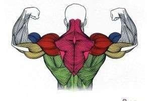 Какая мышца в теле человека самая сильная? Ответ неоднозначен