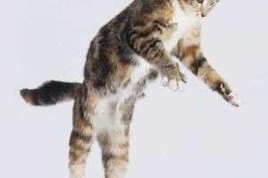 Почему кошки выживают, упав с огромной высоты: неординарные возможности животного организма