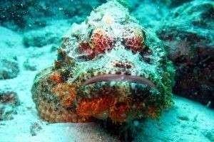 Внимание, опасность: самая ядовитая рыба в мире водится там, где вы любите отдыхать!