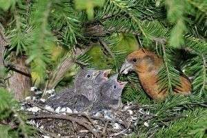 Необычные пернатые — какие птицы выводят птенцов зимой