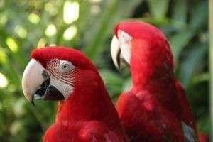 К чему снится попугай: птица летает, нападает, сидит на руках или в клетке — на что указывают детали