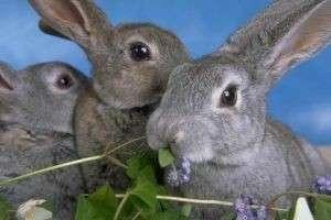 Декоративный кролик: выбор, кормление и основы ухода