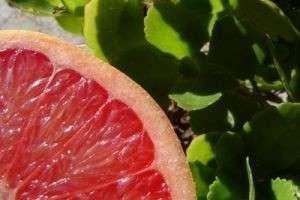 Цитрус со знаком вопроса— польза и вред грейпфрута