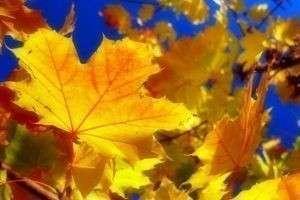 Почему сентябрь назвали сентябрем, октябрь – октябрем, ноябрь – ноябрем: интересные факты