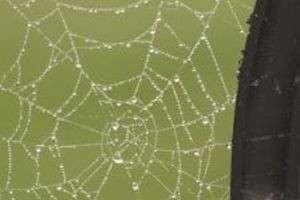 Почему нельзя убивать пауков: приметы, поверья и гадания