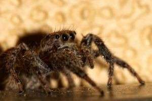 Самые ядовитые пауки в мире: где они водятся и как избежать опасных встреч