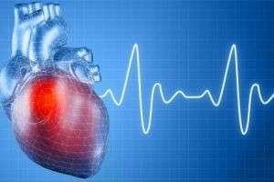 Сколько ударов в минуту должно биться сердце?