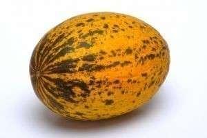 Польза и вред дыни – что дает употребление вкусной  «тыковки»