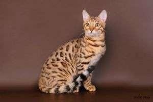 Как отличить кота от кошки?