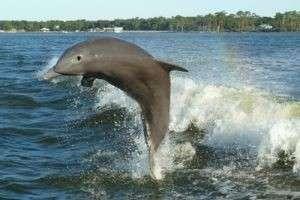 Тайные желания, предупреждение или возможный успех — к чему снятся дельфины